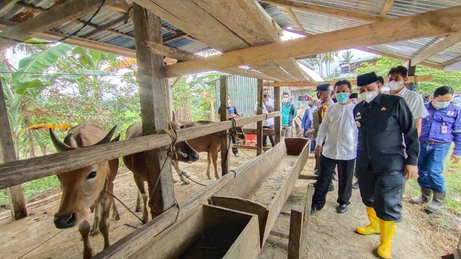 Pemda Ingin Membawa Wajo Pengespor Daging Sapi Terbesar Di Sulsel