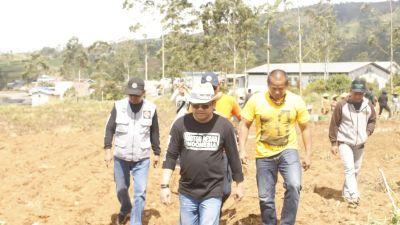 Darmawangsyah Muin Bersama Relawan Sahabat DM Ikut Panen Kentang di Malino